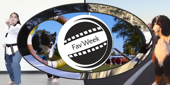 Fav'week #190 : Rémi Gaillard, Chien parkour, Ski, Taekwondo