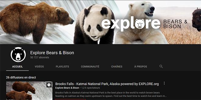Observer les ours et d'autres animaux au Parc National de Katmai